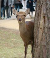 081031shosointen_deer
