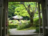 090604yakusoryori_daiganji