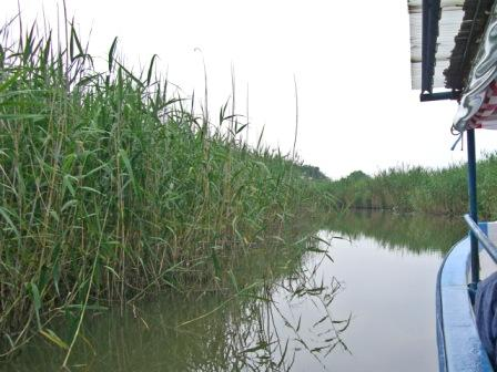 080704suigomeguri_suiro 【葦(よし)の覆い茂る水路を行く】…「よし」は「